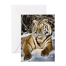 siberian tiger art Greeting Card