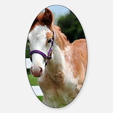roan_foal_journal Sticker (Oval)