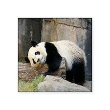 "Copy of panda1 Square Sticker 3"" x 3"""