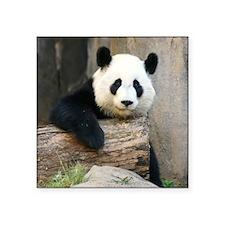 "Copy of panda3 Square Sticker 3"" x 3"""