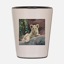 Copy of lion cub Shot Glass