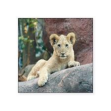 "Copy of lion cub Square Sticker 3"" x 3"""