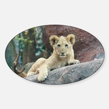 lion cub Sticker (Oval)