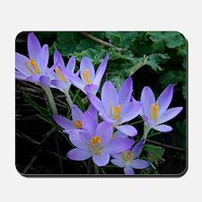 Violet Crocus Mousepad