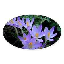 Violet Crocus Decal
