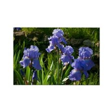 Spring Iris Rectangle Magnet
