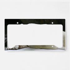 IMG_7825 License Plate Holder