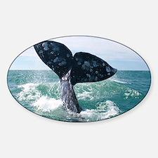 IMG_9025 Sticker (Oval)