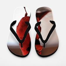 cardinal1_lgp Flip Flops