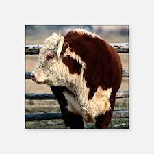 """Bull round ornament Square Sticker 3"""" x 3"""""""