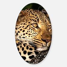 Leopard journal Decal