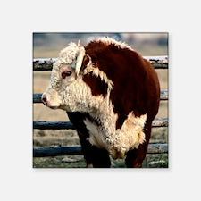 "Bull pillow Square Sticker 3"" x 3"""