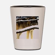 7 Shot Glass