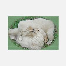 Golden Retriever Puppy Wall Calen Rectangle Magnet