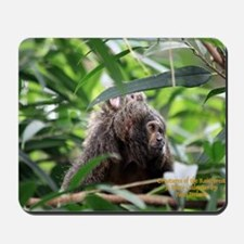 Cover Creatures of the Rainforest Mousepad