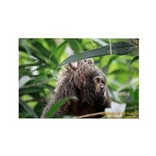 Cover Creatures of the Rainforest Rectangle Magnet