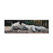Sleeping White Tigers Car Magnet 10 x 3