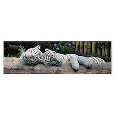 Sleeping White Tigers Bumper Sticker