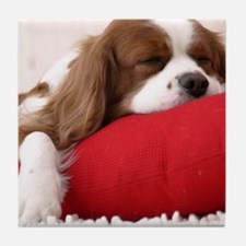 Spaniel pillow Tile Coaster
