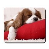 Cavalier king charles spaniel Mouse Pads