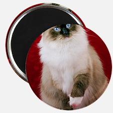 MaddieOval Ornament Magnet