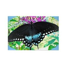 Spicebush Swallowtail Butterfly,  Rectangle Magnet