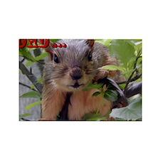 squirrl 15 Rectangle Magnet