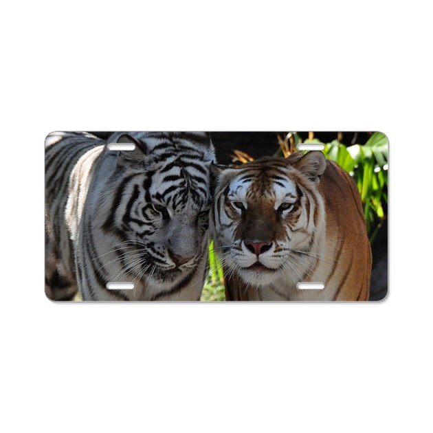 Tiger Rug Ri: White And Orange Tigers Aluminum License Plate By Admin