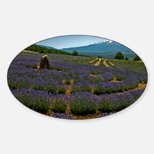Labyrinth Lavender Field, Mt. Shast Decal