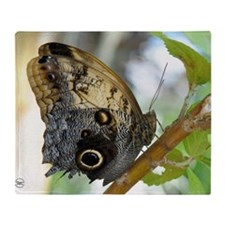 owl_butterfly_calendar Throw Blanket