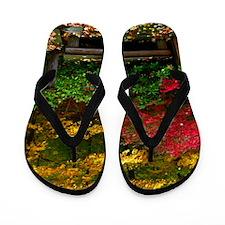 backyard color Flip Flops