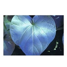 ockanum Heart ~ Copyrite Postcards (Package of 8)