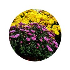 "COLORFUL MUMS 3.5"" Button"