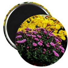 COLORFUL MUMS Magnet