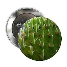 """cactus1_card 2.25"""" Button"""