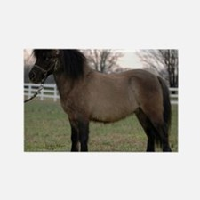 pony_Lg_framed Rectangle Magnet