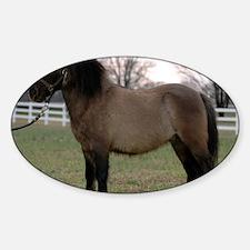 pony_Lg_framed Decal