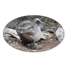 Blue-footed Booby with Baby Galapag Decal