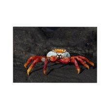 Sally Lightfoot Crab Galapagos Rectangle Magnet