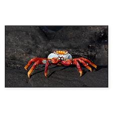 Sally Lightfoot Crab Galapagos Decal