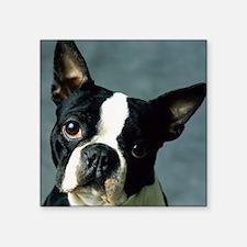 """BT Portrait pillow Square Sticker 3"""" x 3"""""""