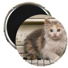 piano kitten panel print Magnet