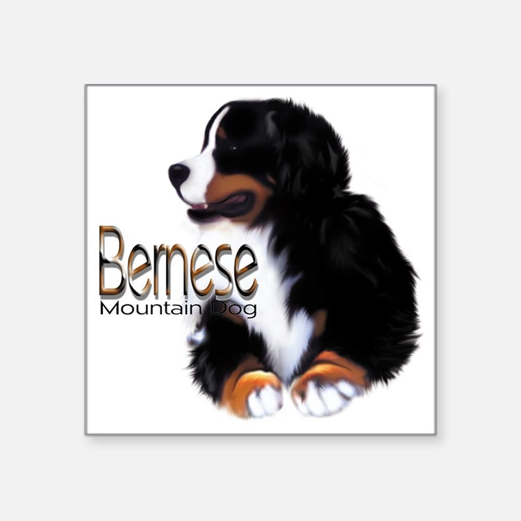 "Bernese Male Square Sticker 3"" x 3"""