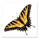 Butterfly Square Car Magnets