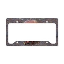 ArmadilloBlkCap License Plate Holder