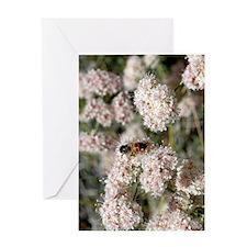 bkwheatbee441 Greeting Card