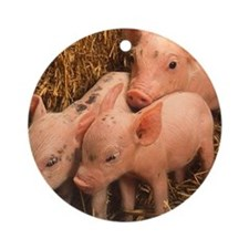 three piglets Ornament (Round)