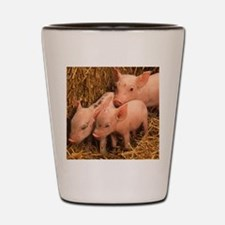 three piglets Shot Glass