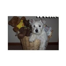 billy_westies Rectangle Magnet