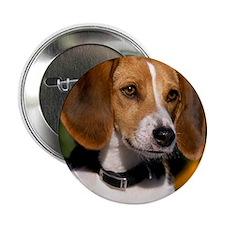 """AFH round ornament 2.25"""" Button"""